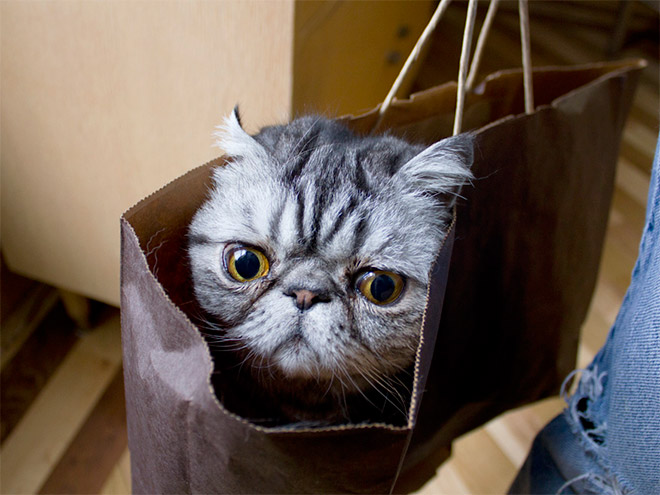 cat-bag9
