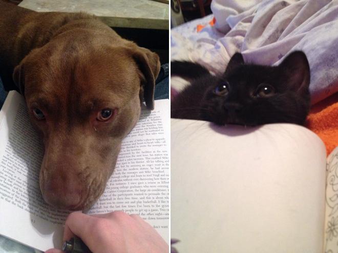 reading-pets10