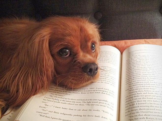 reading-pets17