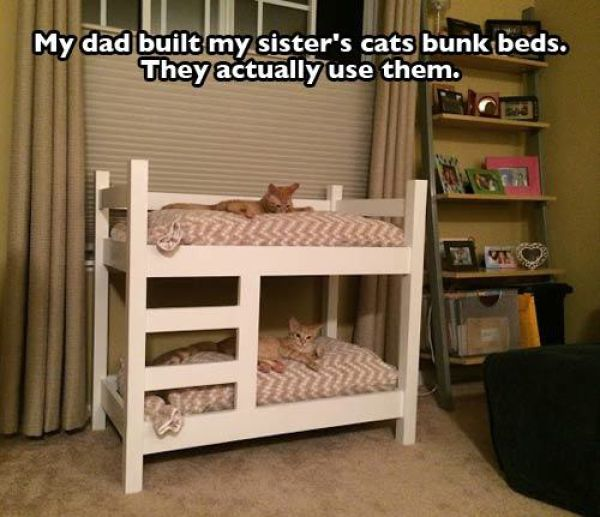 pet_owners_who_really_treat_their_pets_like_family_640_33