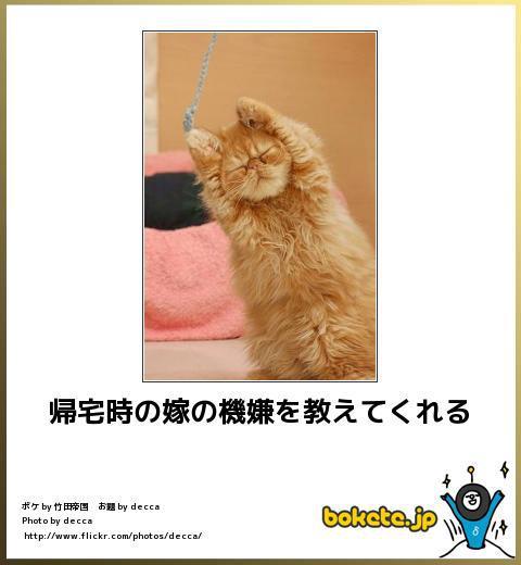 ネコでボケて-5