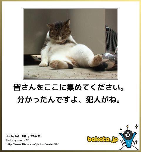 ネコでボケて-9