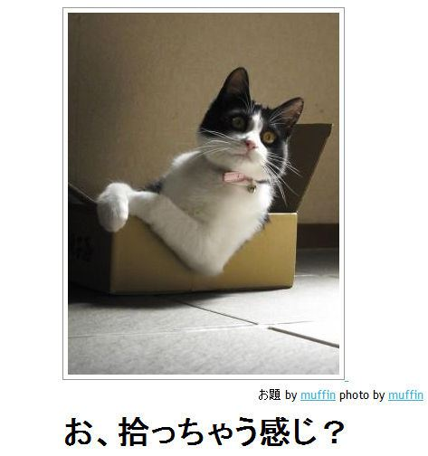 ネコでボケて-7