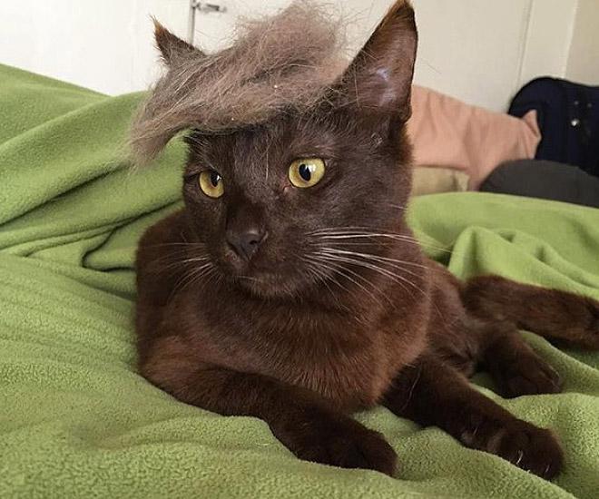 trump-cat7
