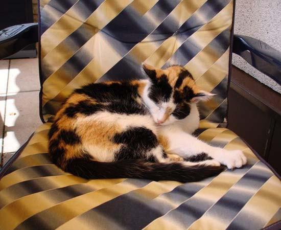 猫はかくれんぼの達人! 猫の模様はちゃんと意味があります。06