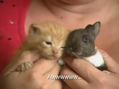 みなしごウサギも我が子同然に育てるお母さん猫05