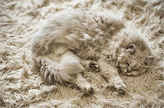 猫はかくれんぼの達人! 猫の模様はちゃんと意味があります。04