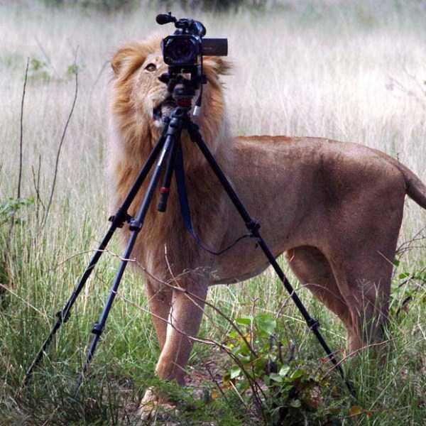 animals-photographers-29