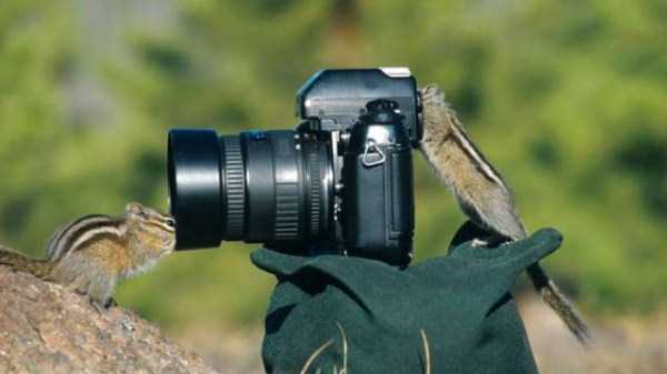 animals-photographers-4