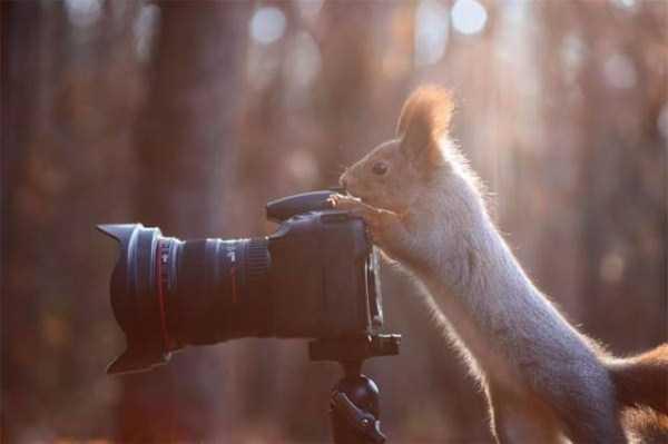animals-photographers-5