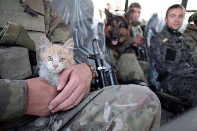 soldiers_share_some_bonding_time_with_cats_640_06