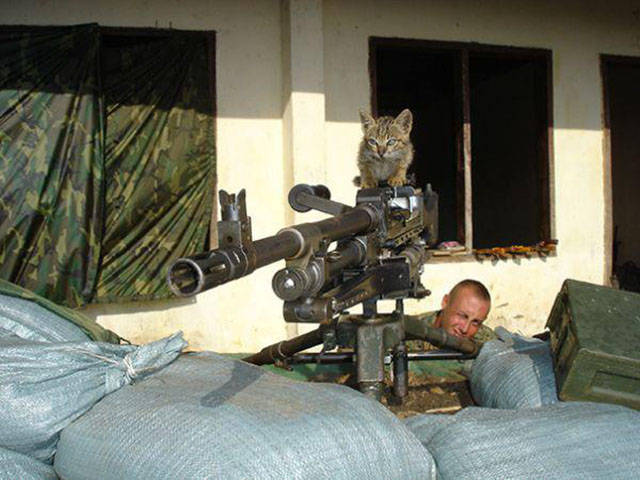 soldiers_share_some_bonding_time_with_cats_640_19
