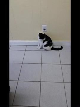 01-前髪切りすぎた!みたいな柄の猫が面白可愛い(ΦωΦ)