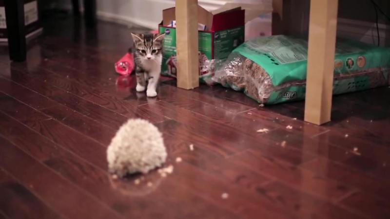 03-仔猫とハリネズミ。まだちょっとお互いが怖いけど友だちになれるかな?