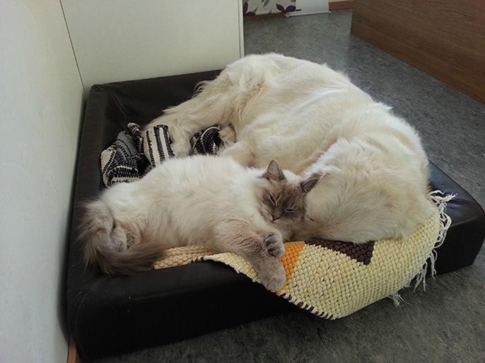 ずっと友だち! 猫と犬のすてきな関係!09