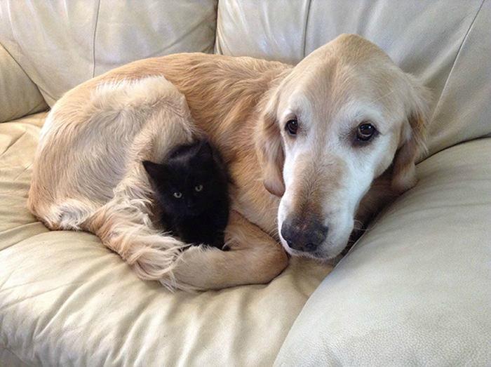 ずっと友だち! 猫と犬のすてきな関係!25