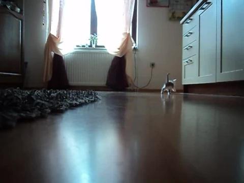 03-お母さんどこぉ? 母猫がちょっとどこかに行って寂しそうな仔猫