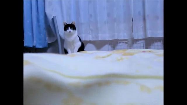 04-よちよち歩きの仔猫の成長記録。だんだん歩くのが上手になってる(#゚ロ゚#)