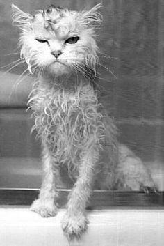 02-お風呂が嫌いな猫の不機嫌な写真15枚