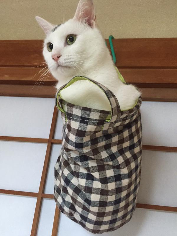 03-ミノムシみたいな猫が発見されTwitterで話題に!