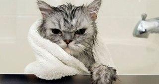 thumb-お風呂が嫌いな猫の不機嫌な写真15枚