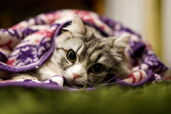 災害から飼い猫を守るためにできること