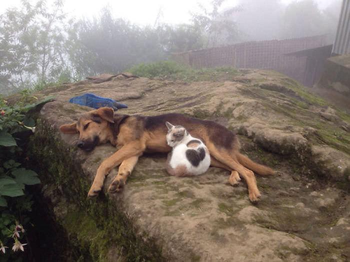 ずっと友だち! 猫と犬のすてきな関係!12