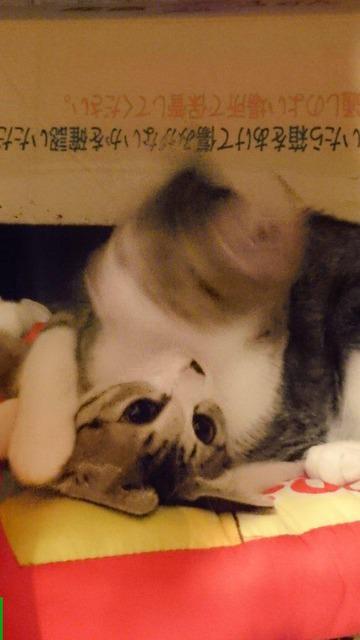 07-猫の新必殺技「猫ドリル」って何?
