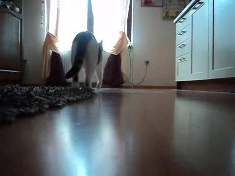 05-お母さんどこぉ? 母猫がちょっとどこかに行って寂しそうな仔猫