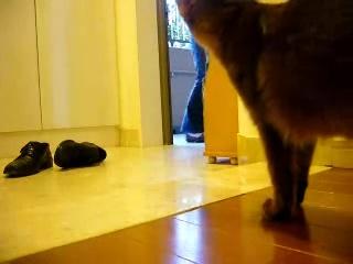 早く帰らなきゃ。 甘えん坊の猫のお留守番中の様子05