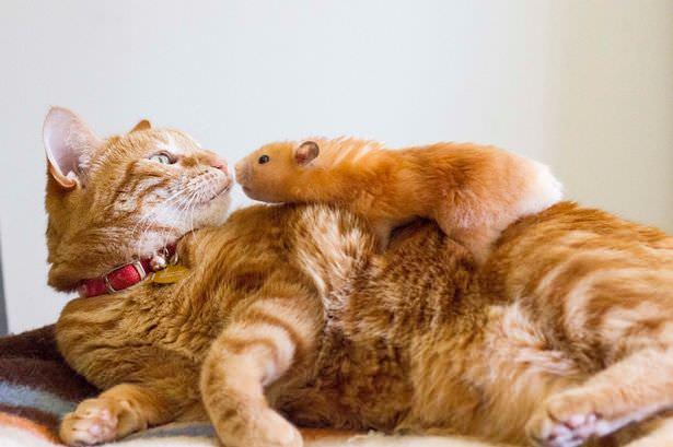 03-トムとジェリー? 猫とハムスターの仲良し画像にホッコリ(。・∀・。)