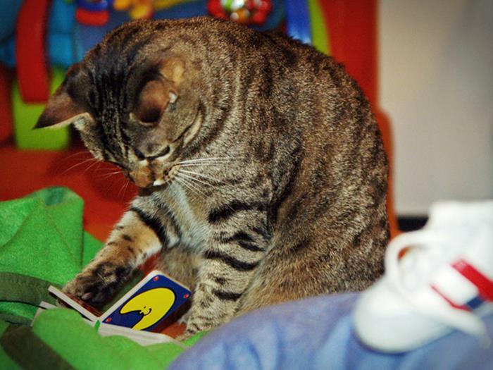 11-本好きのみなさんへ。読書が好きな猫たちはいかが?