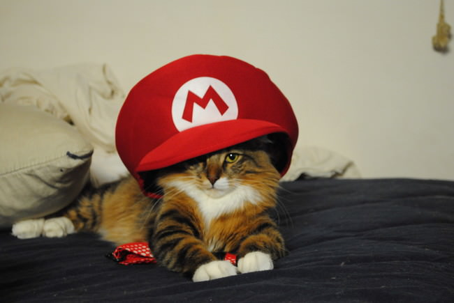 015-帽子をかぶったお洒落な猫たち。どの子が1番かわいい?
