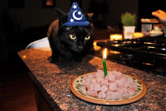 023-帽子をかぶったお洒落な猫たち。どの子が1番かわいい?