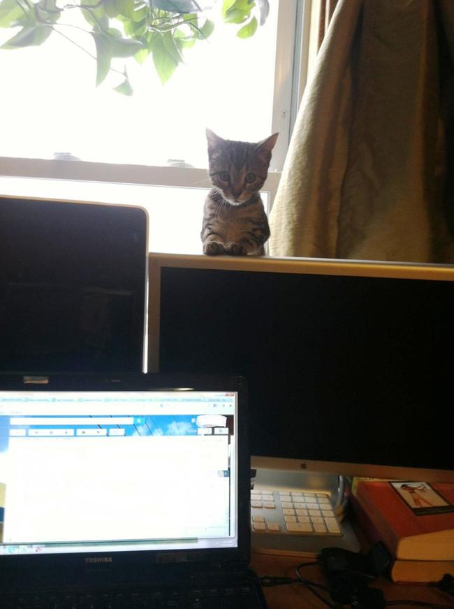 07-自宅で仕事する際の最大の敵はこいつです。アピールし過ぎな16匹の猫たち。
