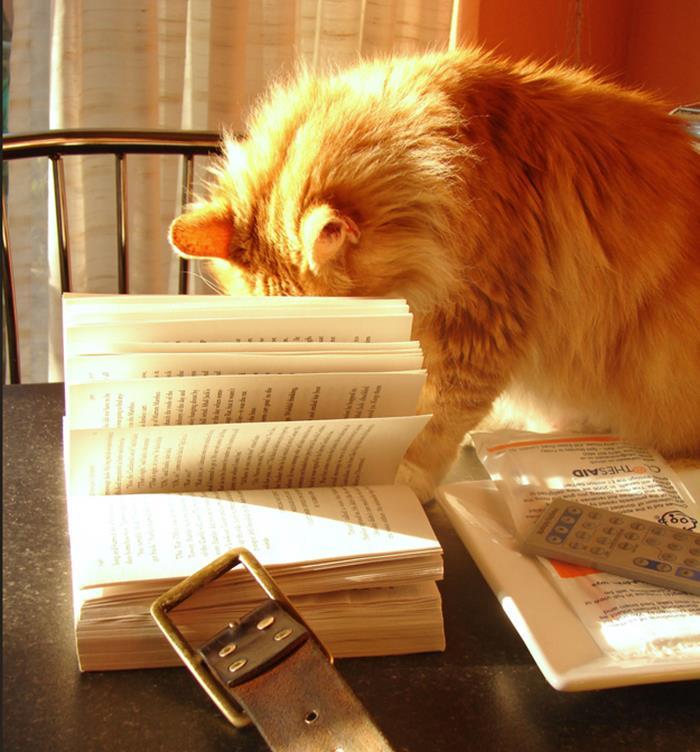 02-本好きのみなさんへ。読書が好きな猫たちはいかが?