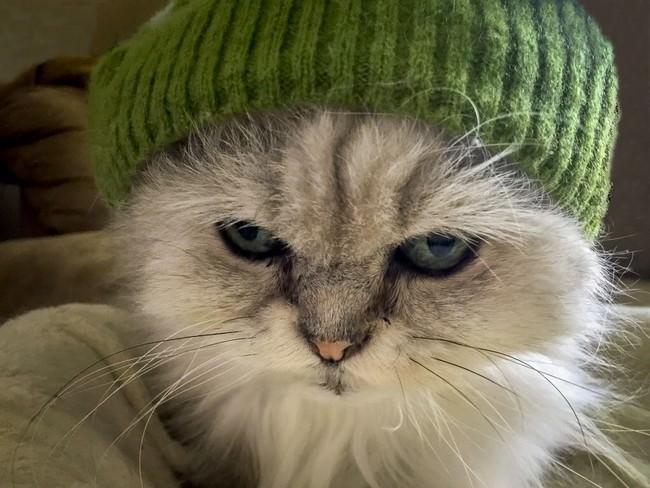 011-帽子をかぶったお洒落な猫たち。どの子が1番かわいい?