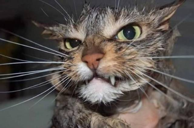 cats_that_are_scarily_evil_looking_640_03
