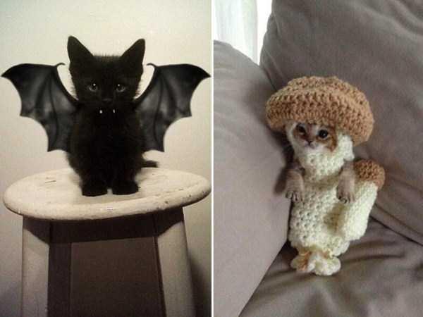 diy-halloween-pet-costumes-11