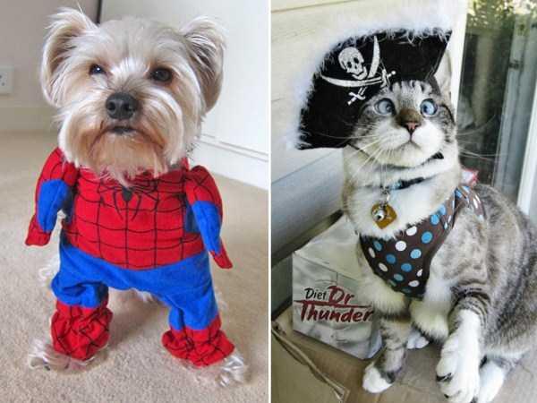 diy-halloween-pet-costumes-13