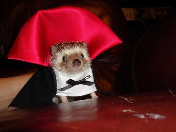 diy-halloween-pet-costumes-14