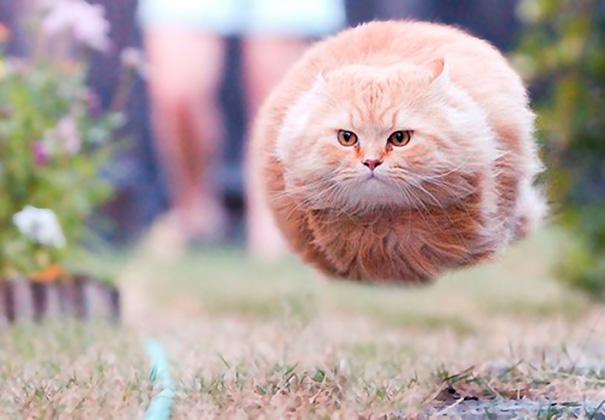 funny-perfectly-timed-cat-photo-50__605