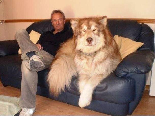 17-Big-dog13-610x457