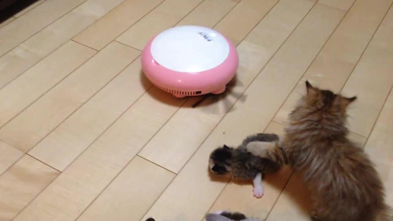 05-掃除機ロボットの上で遊ぶ子猫。滑って落ちても安心!だって優しく見守る家族がたくさんいるもの