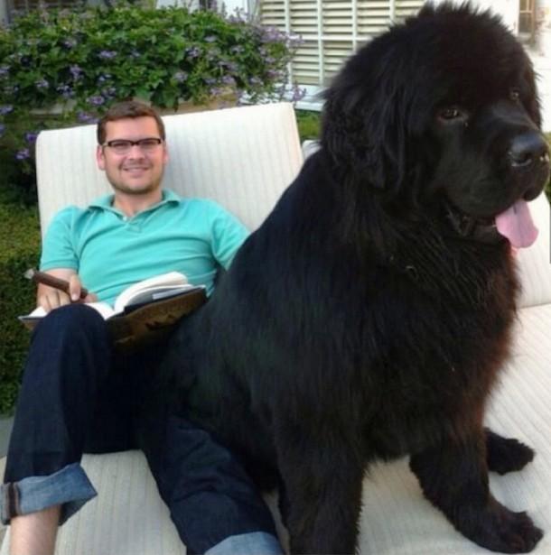 3-big-dogs-610x615