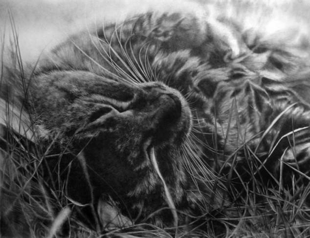 07-この16枚のネコ画像にはある秘密があります。ネコ好きのみなさんなら分かりますよね!