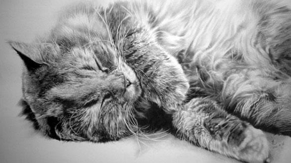 thumb-この16枚のネコ画像にはある秘密があります。ネコ好きのみなさんなら分かりますよね!
