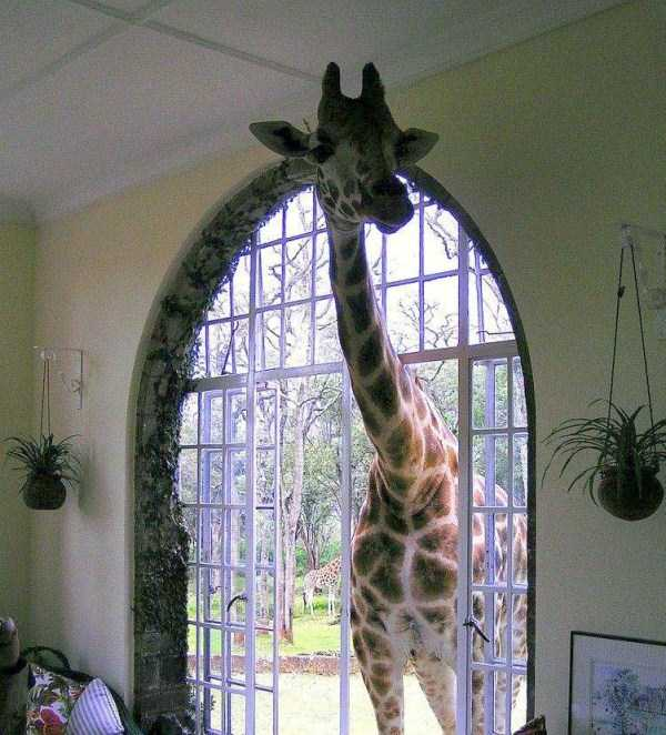 meanwhile-in-africa-23
