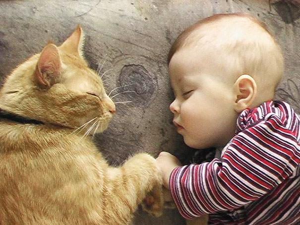 07-ほっこり20枚! 赤ちゃんとネコの仲良しな風景