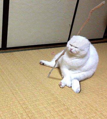01-完全に「カリン様」なネコが発見されてTwitterで話題に!
